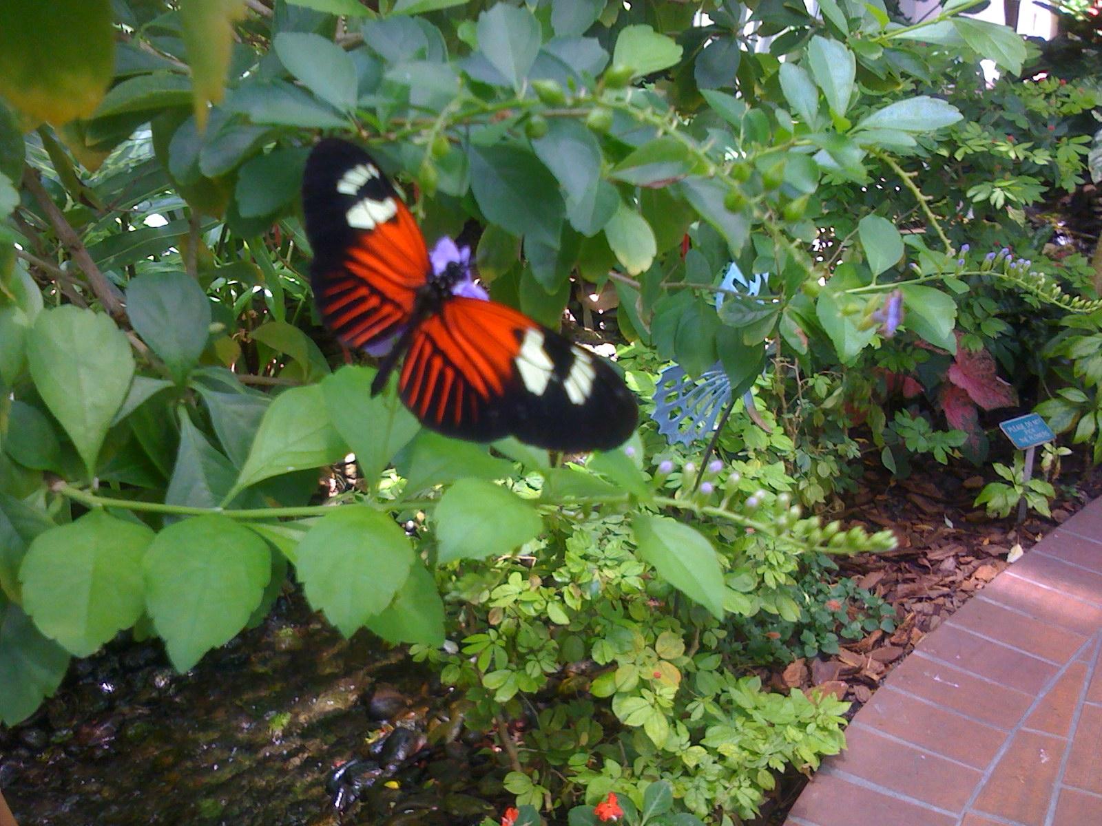 Genial Key West Gardens