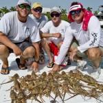 Florida Lobsters