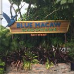 Beautiful fountain in front of the Blue Macaw.