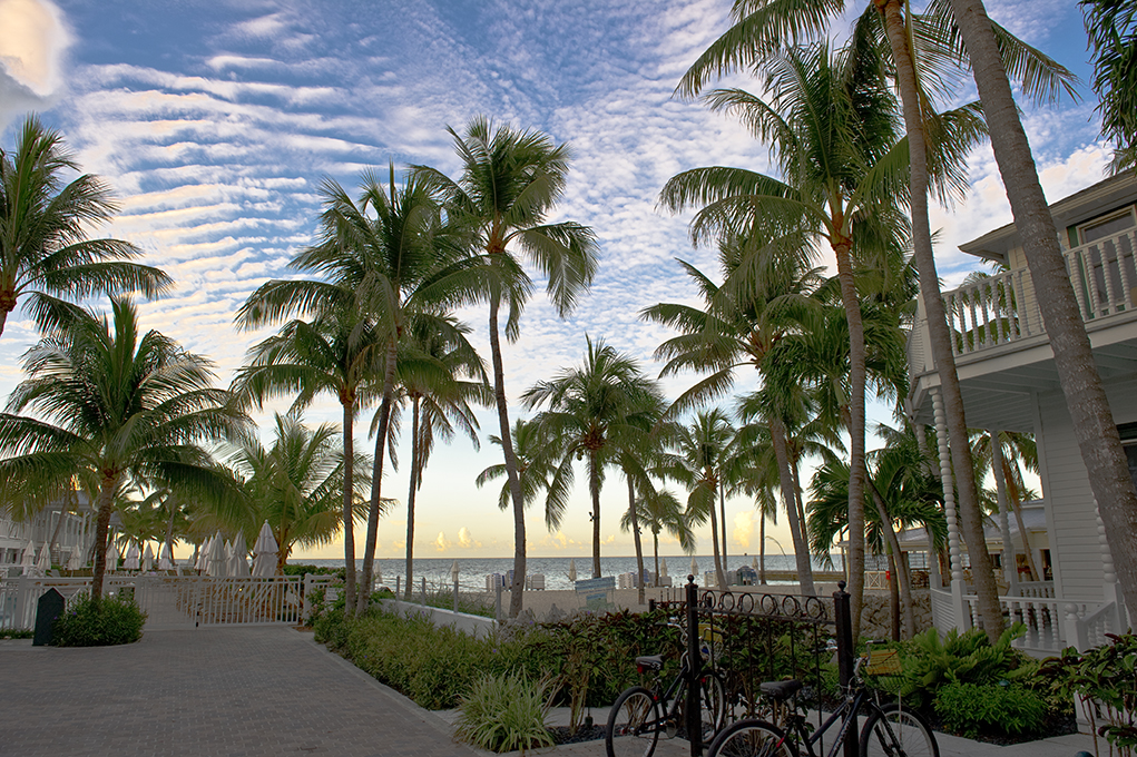 palm trees, tropical view, resort, key west, accommodations, places to stay,