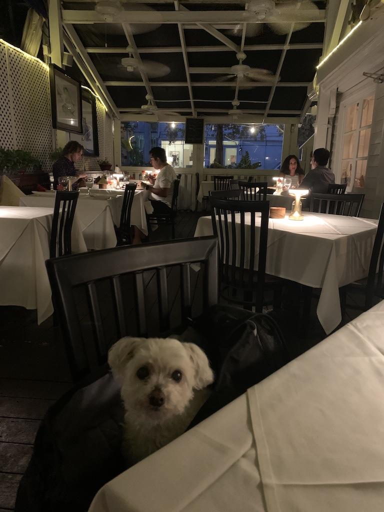 Cafe Sole Pet Friendly Key West restaurant